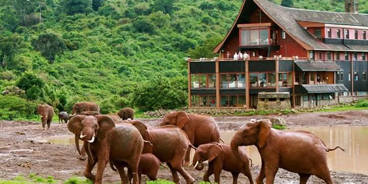 Zanzibar & Kenya Safari