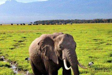 kilimanjaro-wilderness